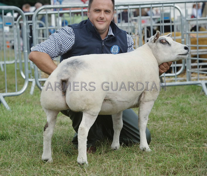 Beltex Champion at Turriff Show from Stuart Wood,Woolhillock, Skene.