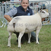 Beltex Champion at Turriff Show from Stuart Wood,Woolhillock, Skene.
