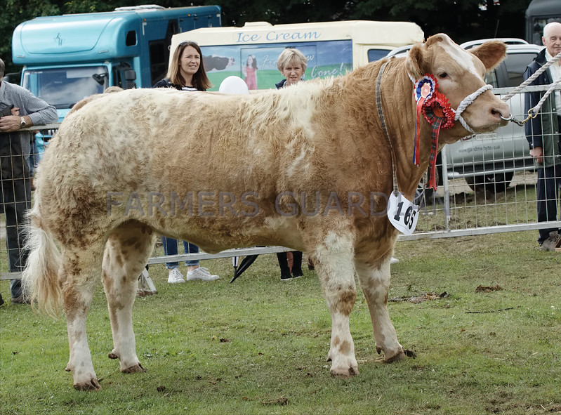 Commercial Cattle Champion at Turriff Show from Rebecca Stuart and Blair Duffton, Huntly.