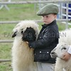 Young Sheep Handler at Turriff Show
