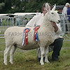 Border Leicester Champion at Turriff Show from Grant & Wright, Innergellie House, Kilrenny, Anstruther.