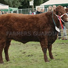 "Saaler Champion at Turriff Show ""Whitebog Kim"" from Alister MacKenzie, Whitebog Farm, Fortrose."