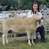 Commercial Sheep Champion at Turriff Show from W&J Brown, Hilton of Culsh, New Deer, Turriff.