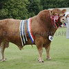 """Limousin and Show Supreme Champion at Turriff Show """"Whiskey Infinity"""" from Harry Emslie, Kinknockie, Mintlaw, Peterhead."""