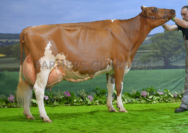 Ayrshire champion Loukat Lucky from R.A.Brown.
