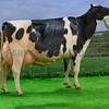 The Holstein and supreme champion, Peak Goldwyn Rhapsody from Yasmin Bradbury.