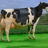 The Holstein and supreme champion, Peak Goldwyn Rhapsody from Yasmin Bradbury.