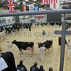 UK Dairy Expo, Borderway mart, Carlilse, Cumbria.