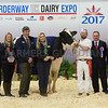 UK Dairy Expo, Borderway mart, Carlilse, Cumbria.