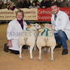 The reserve champion pair of lambs, Texels from Steve and Sara Gibbons of Tregoyd, Brecon, Powys.