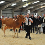 Welsh Dairy Show 2014