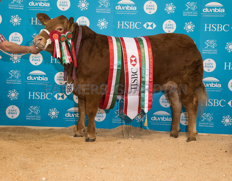 The beef champion, Mousae from Price and Rogers.