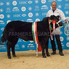 The baby Beef champion, Limousin cross Little Mix from Tecwyn Jones.