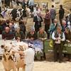 Holstein Show020
