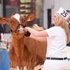 Holstein Show004
