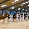 Holstein Show016