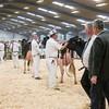 Holstein Show011
