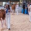 Holstein Show006