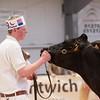 Holstein Show013