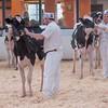 Holstein Show008