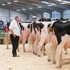 Holstein Show017
