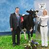 Holstein Show002