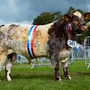 Croftends King from Messrs Bellas and son.