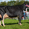 Boltonmanor Damion Sadie 3 from M and D Stable and Son
