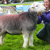 Upland sheep champion from B.Dickinson.