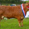 WESTMORLAND Limousin-3341