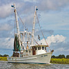 """The Lil' Hoss""<br /> Coffin Creek<br /> St. Helena Island, SC"