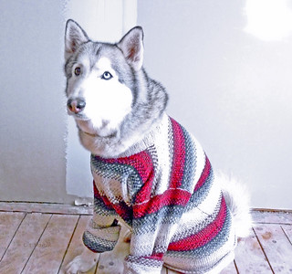 Kody in Christmas sweater, 2011