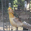 Some exotic caged bird, Villa San Marco, Agrigento
