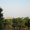 Valle dei Templi viewed from the Villa San Marco, Agrigento.
