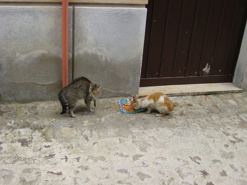 Gangi: the pasta cats are being threatened by a local dog who wants their pasta. Meanwhile, the little old lady in the balcony above is shouting at the dog in Sicilian to leave the cats alone and let them have their pasta.