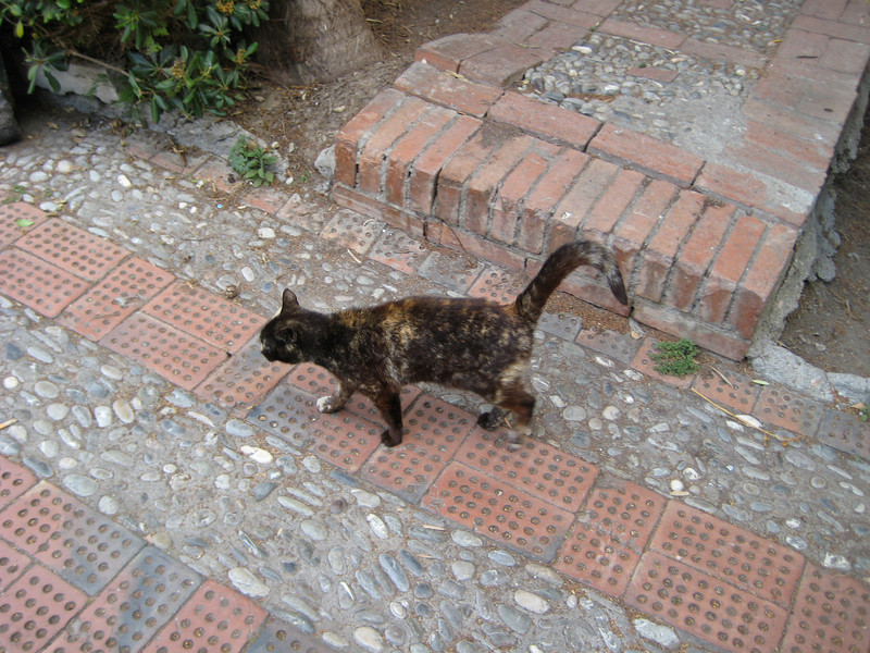 Another Taormina stray in the Villa Communale