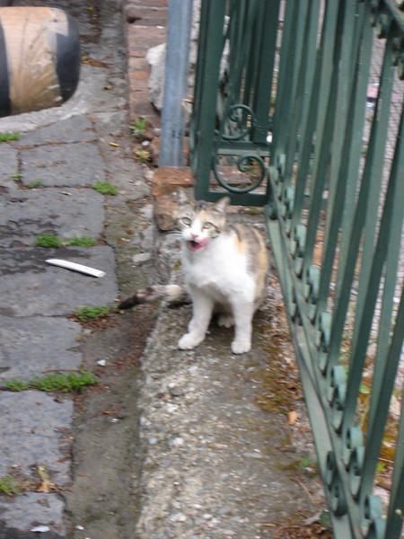 Taormina: a stray licking its lips