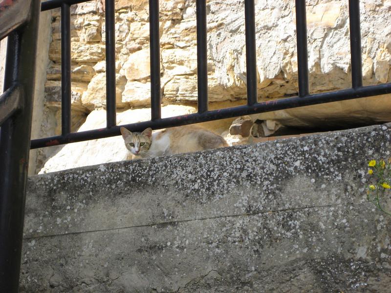 Sperlinga cat