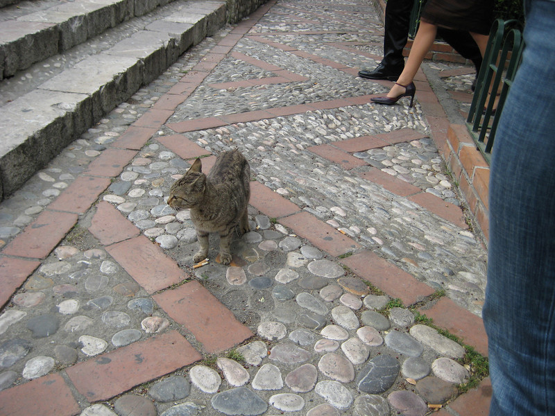 Taormina cat