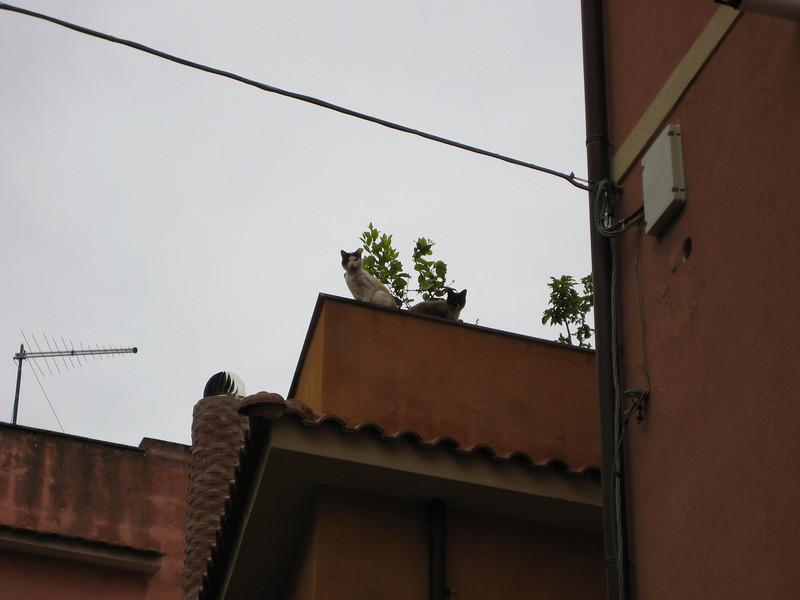 Taormina: pet cats on a roof