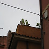 Taormina: pet cats on a roof