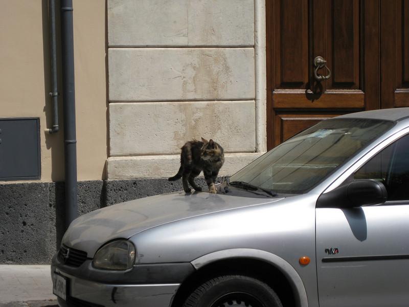 Acireale: streetcat