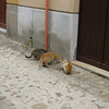 Gangi: These are the pasta cats. A little old lady who lives above has left pasta for the cats to eat.