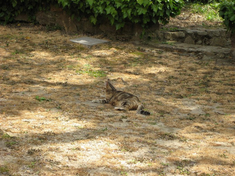 Gangivecchio: one of the resident cats