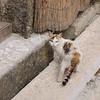 Gatto di Scopello