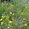 Scopello wildflowers