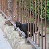 Gatto, Giardino Garabaldi