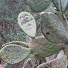 Prickly pear graffiti