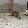 Gangi: the pasta cats.