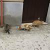 Gangi: the pasta cats